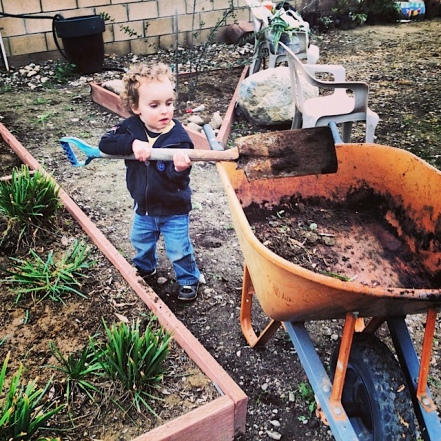 IntroductionHicksPeterson_Isaiah gardening at Tongva garden for MLK of service